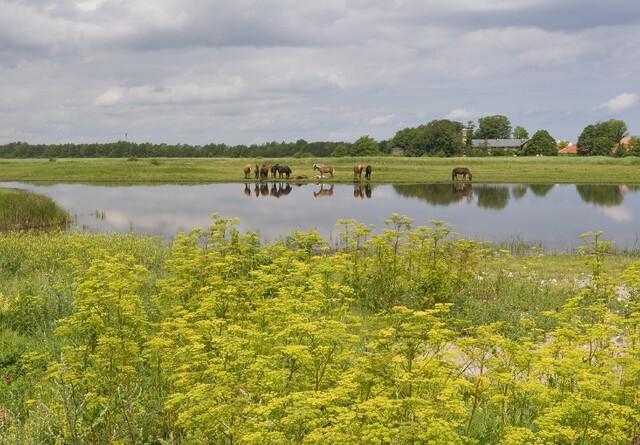Sidste chance for tilskud til vådområder i 2012