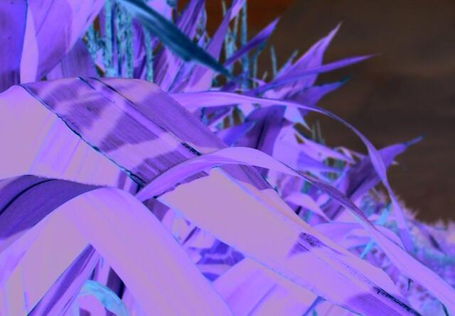Den europæiske majs og hvedehøst nedjusteres