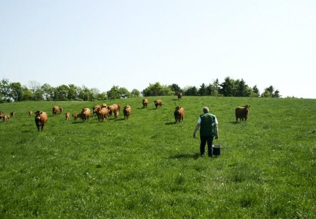 Flere landmænd vil i gang med naturprojekter