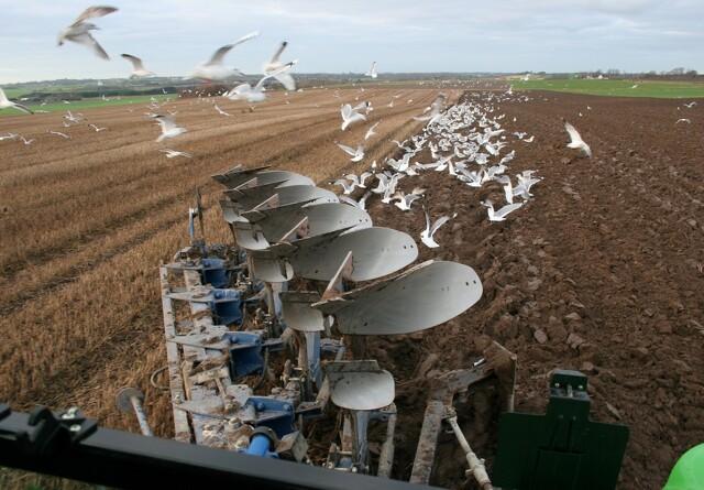 Forsker: Økologer bør finde ploven frem