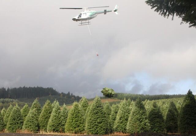 Sælger én million juletræer årligt