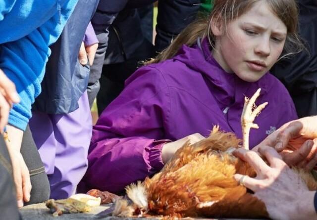 Arla sender børn på mad-lejrskoler
