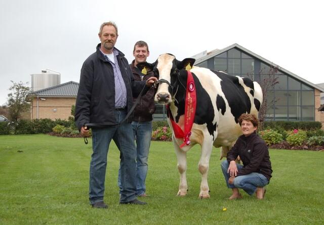 Sønderjysk ko sætter danmarksrekord i mælkeydelse