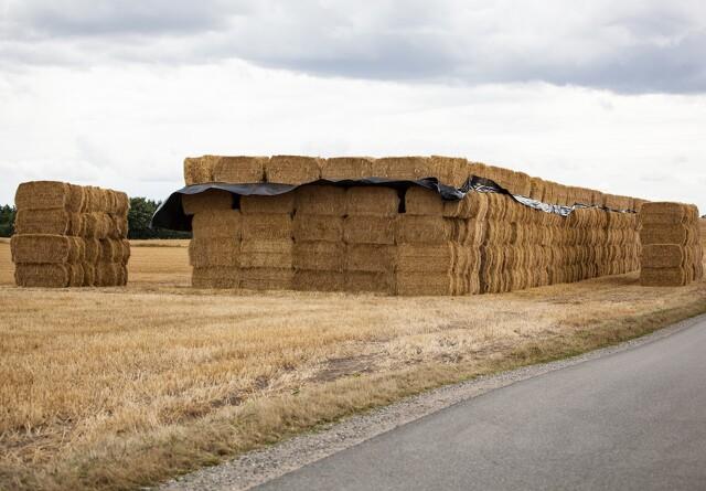 Jyske landmænd får tilladelse til ammoniakbehandling