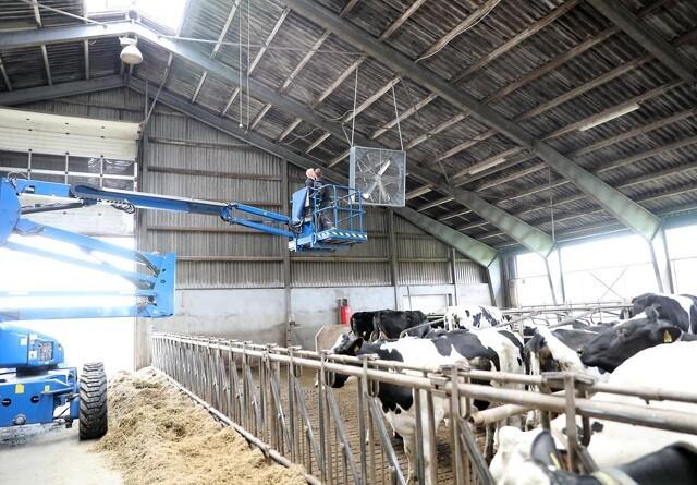 Nu kommer varmen - hvad gør du med køerne?