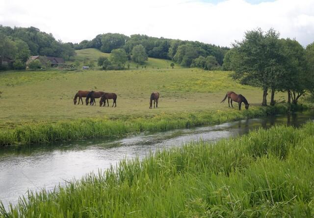Kursus skal gøre landmænd klogere på forvaltning af værdifuld natur