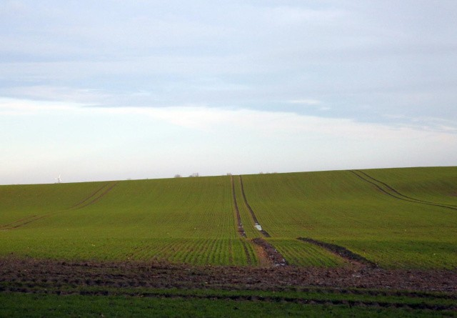 Styrelse: Målrettede efterafgrøder er ikke omfattet af krav om miljøvurdering