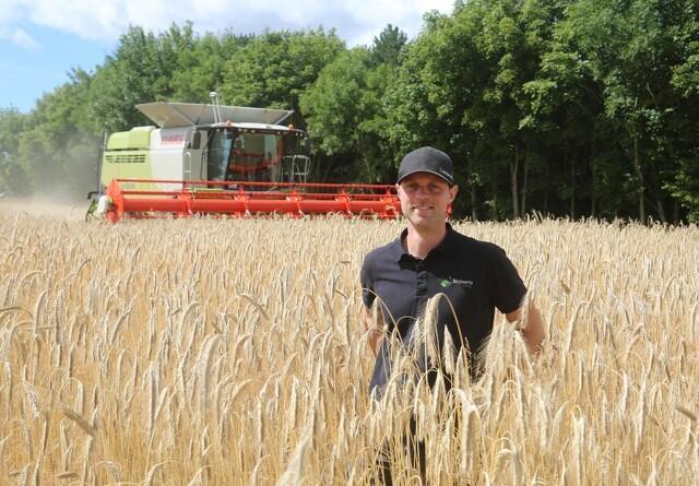 Tørke i maj sætter aftryk i årets brødrug