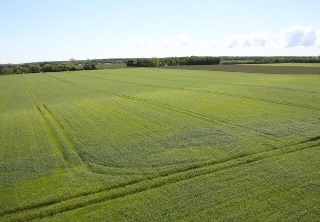 Ansøgningsrunden til økologisk arealtilskud er udskudt