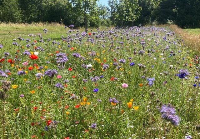Blomsterstriber booster biernes fødegrundlag