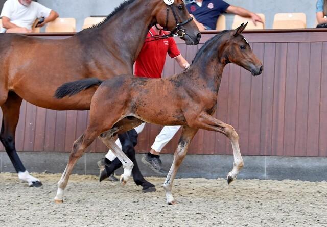 Stor succes for mindre hesteauktioner