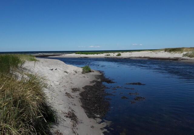 Gefion: Ignorerer myndighederne igen miljøpåvirkning af vandmiljøet