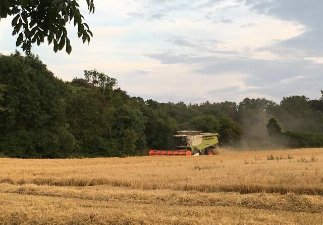 Landboforening: Høsten har været svingende
