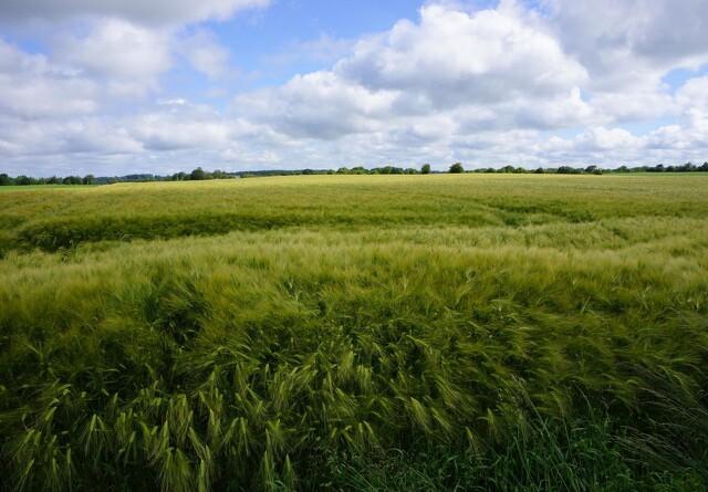 Sagro: Lovkrav om miljøledelse kan give økonomisk gevinst