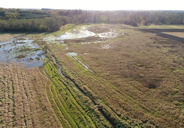 Nyt projekt: Færre, men rigtigt placerede efterafgrøder giver større miljøgevinst