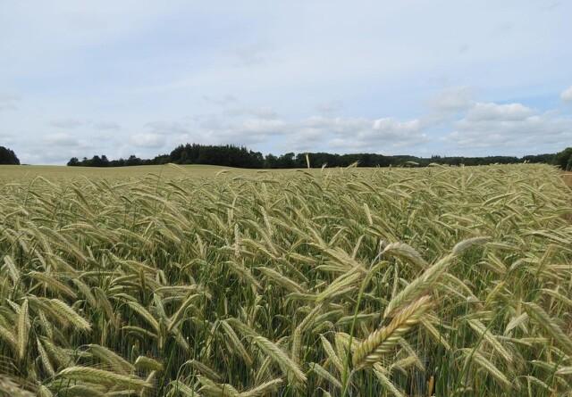 Debat: Tak til udlandet for at rose danske landmænd