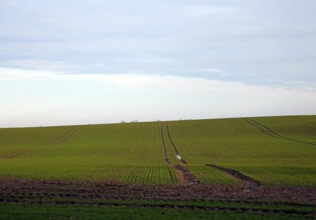 Ansøg om tilskud til målrettede efterafgrøder og alternativer