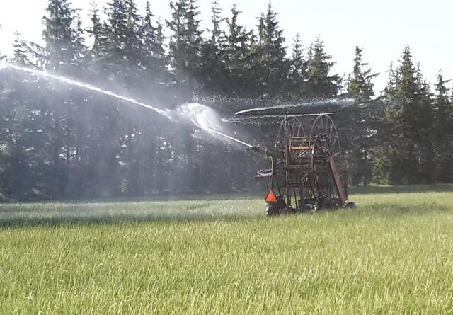 Plantesorter skal forhindre tørketab