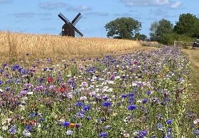 Blomsterprojekt på Bornholm udvider til gavn for biodiversitet