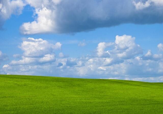 Flere plantearter i græsmarken giver flere insekter