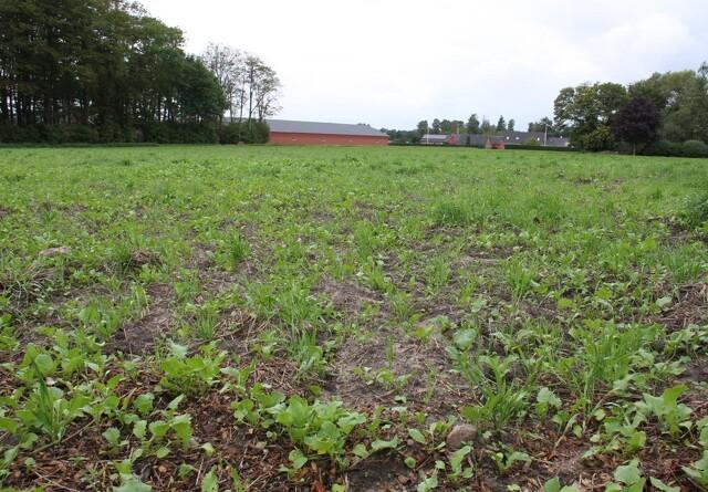 Landboforening kritiserer minister for efterafgrøderegler