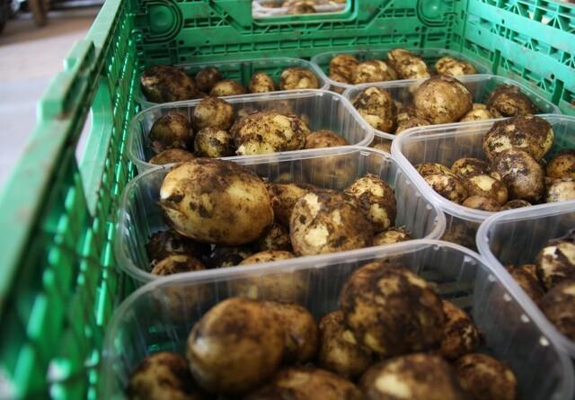 Landmand inviterer til redningsaktion: Et ton kartofler i fare for at rådne