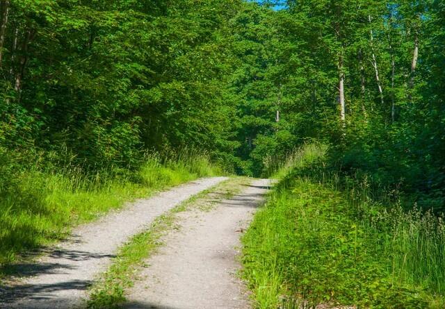 EU fordobler tilskud til skovrejsning