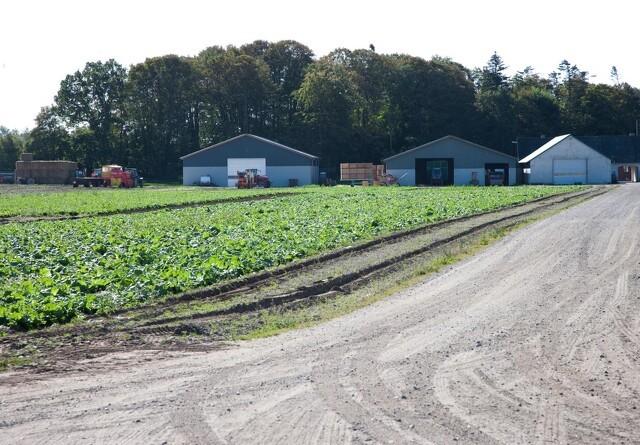 Større økonomisk og finansiel robusthed i landbruget