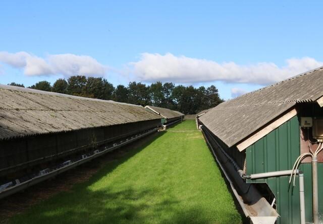 Kæmpe brøler fra SSI medførte udskamning af minkavlere