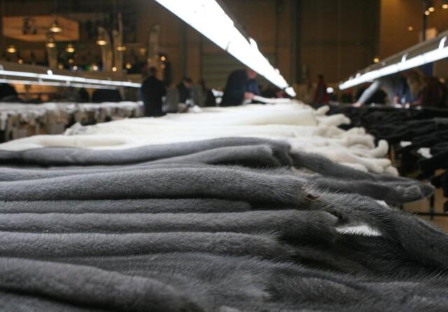Minkavlerformands farm ramt: Må aflive 35.000 mink