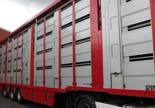 Svinetransport væltet: Flere svin døde