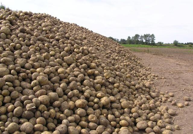Landbrugsstyrelsen indstiller kontrol i syv nordjyske kommune