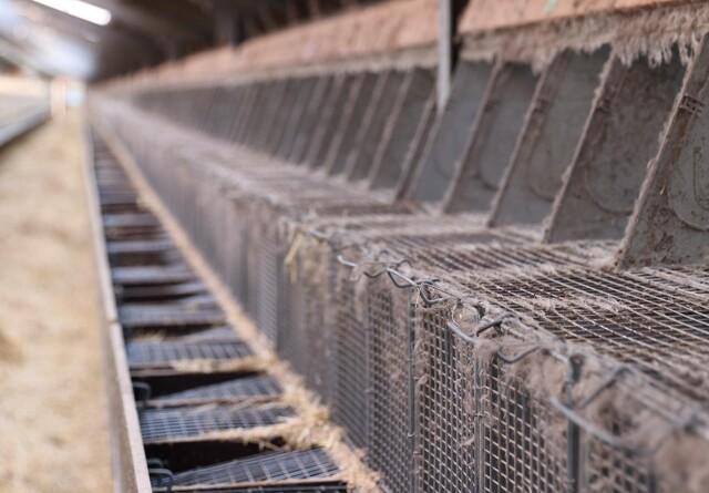 10 minkfarme er helt eller delvist ejet af udenlandske ejere