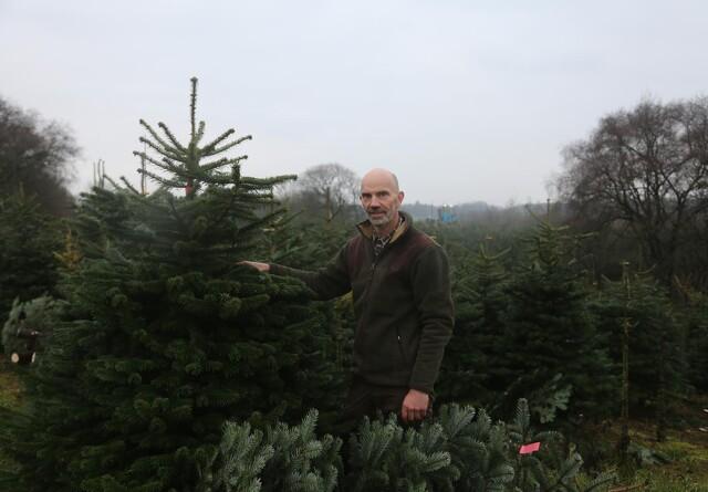 Forædlet dansk juletræsproduktion