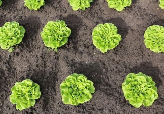 Økologieksporten er næsten fordoblet på fem år