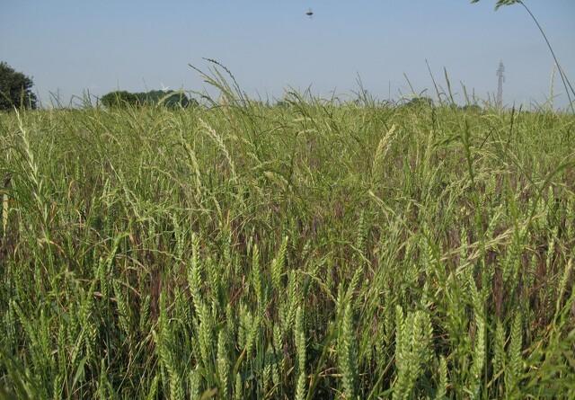 Fokus på markdrift med mindre brug af pesticider