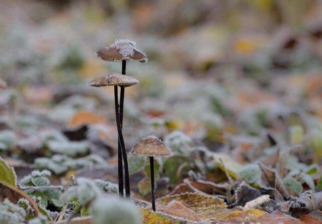 Truede arter foretrækker løvskov