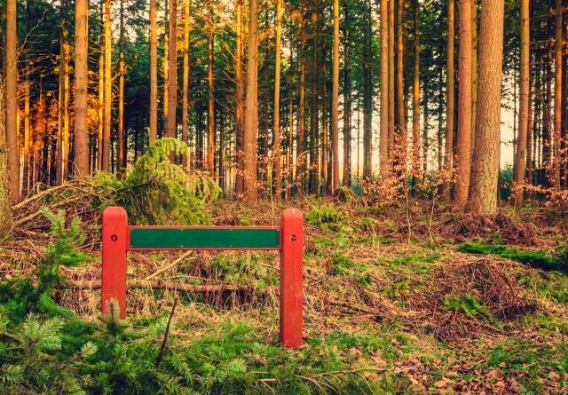 Bæredygtigt skovbrug er ikke en trussel mod biodiversiteten