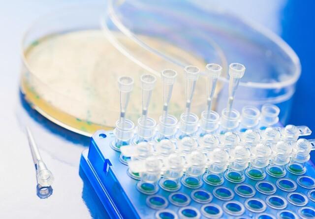 PRRS-virus kan også påvises i spytprøver