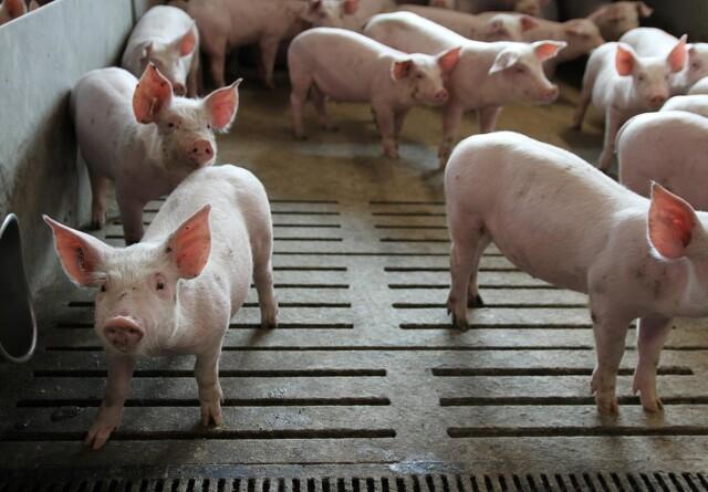 Bekymrede naboer danner forening mod nyt svineanlæg