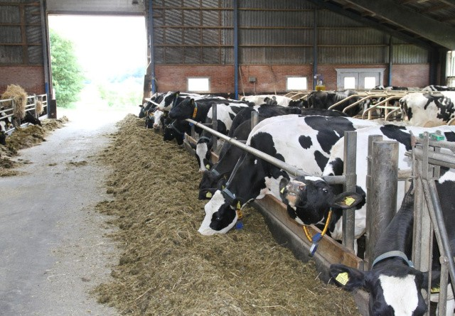 Valutafond anbefaler halvering af husdyrbestand