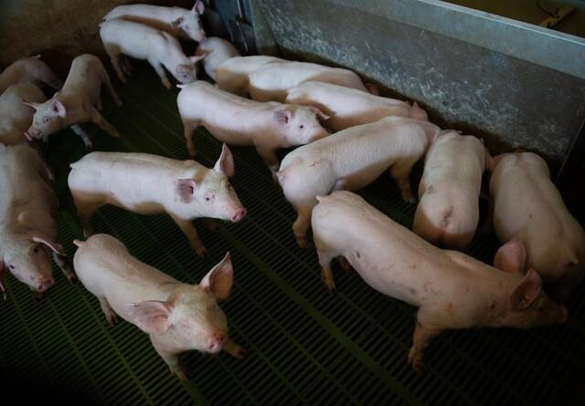 Dyretransportør om Fødevarestyrelsen: Ren chikane