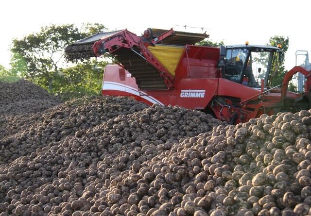 Import af læggekartofler fra England er nu fortid