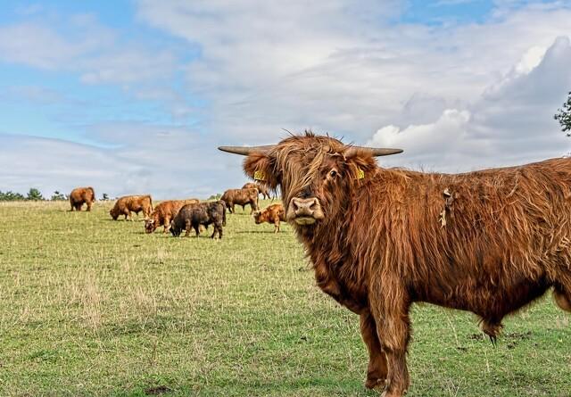 Dyre markskydninger truer erhverv