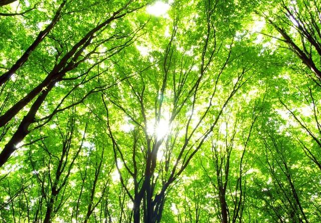Ansøgningsrunden for skov med biodiversitetsformål er åben