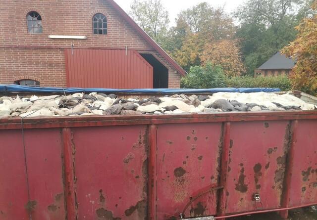 Fødevarestyrelsen får opbakning fra minister som vogteren af dyrevelfærd