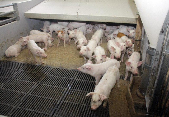 Forstærket svinefoder-samarbejde