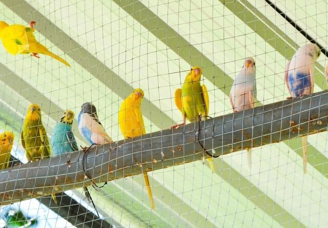 Fugleinfluenza i københavnsk ungdomsklub
