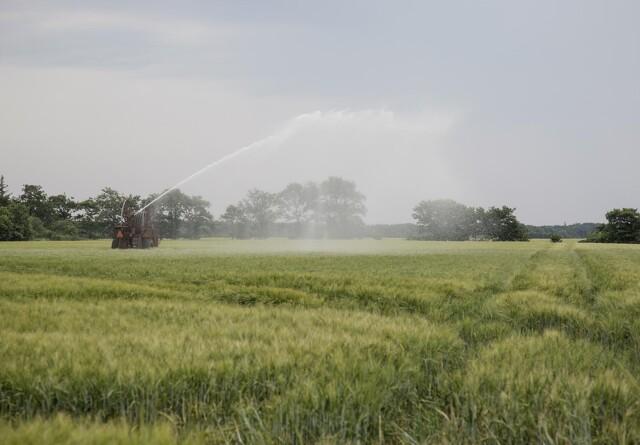 SF vil have støttemillioner tilbage fra landmænd efter regnefejl
