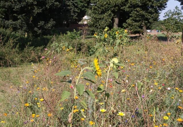 Syngenta og DLF indgår samarbejde for at fremme biodiversiteten